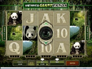 untamed-giant-panda-slot